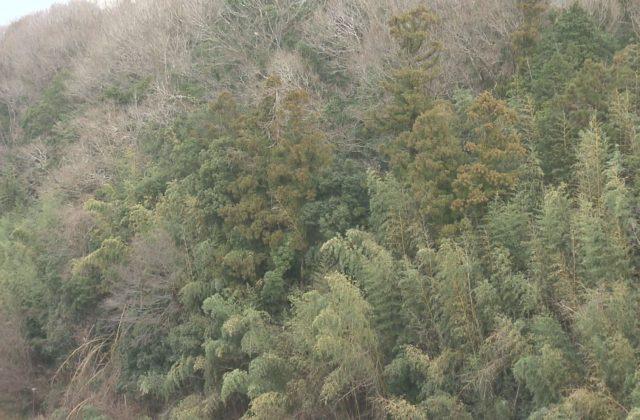 男性警察官が死亡 三田市の雑木林で